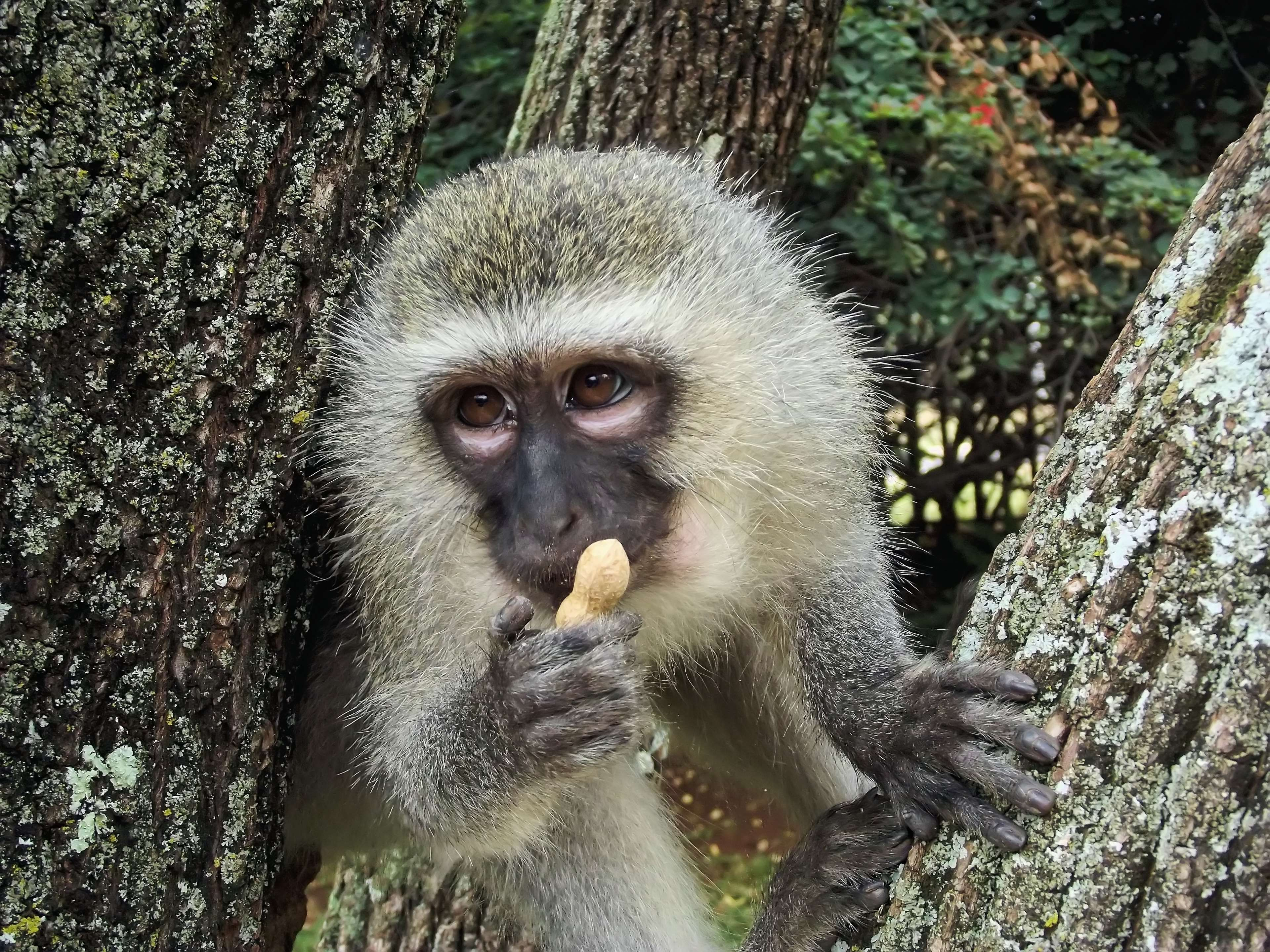 Картинки диких обезьян
