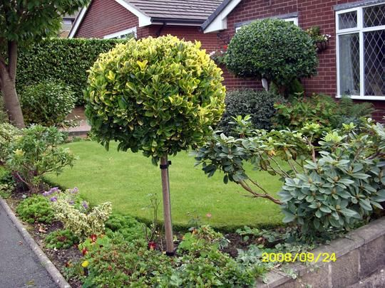 Good A Garden Picture Small Garden But There Are Lots Of Evergreen Shrubs  Including The Euonymus Standard, Conifers, Hebes,, Peiris.