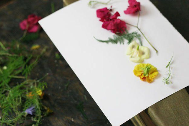 Place flowers on paper diy pinterest flowers flower and craft how to press flowers perfectly mightylinksfo