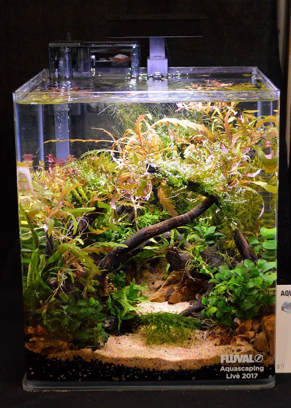Would be great for a betta fish aquarium pinterest aquarium