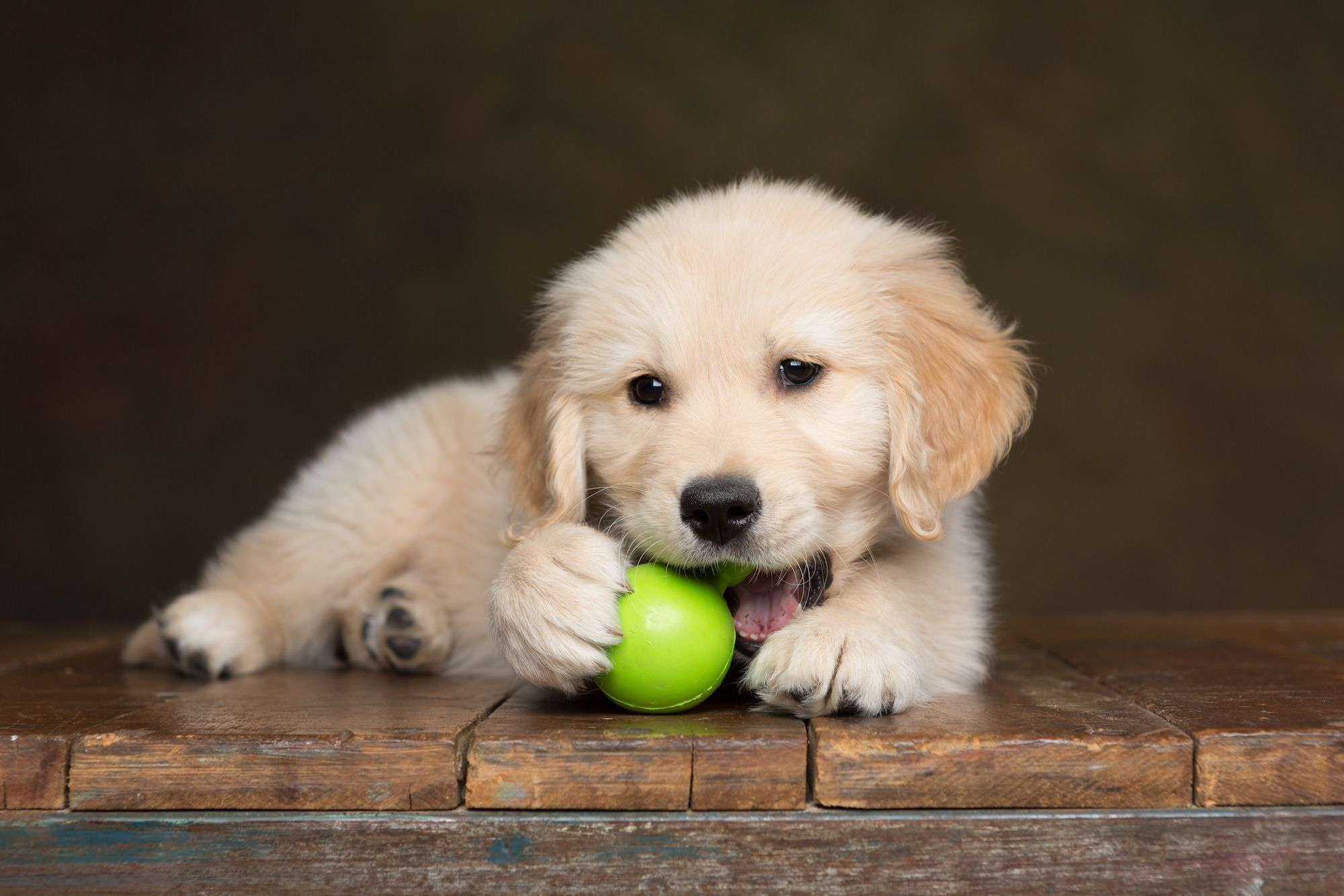 Best Safe Chew Toys For Puppies Puppy Toys for Chewing