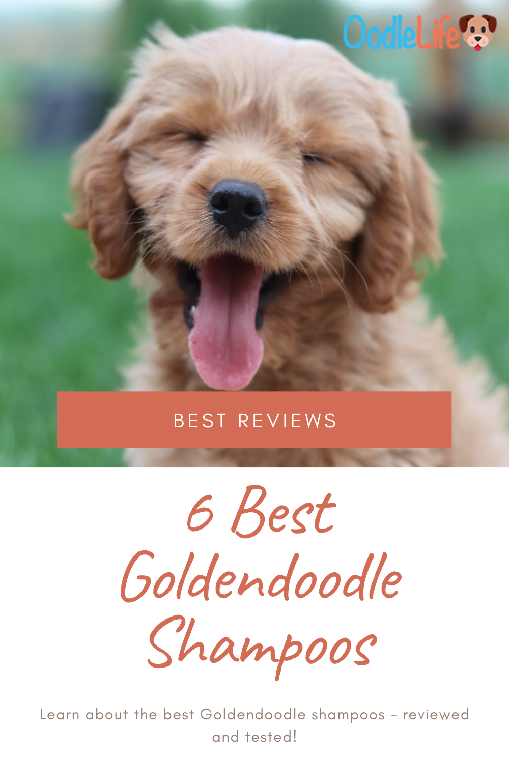 The Top 6 Best Shampoo For Goldendoodles In 2020