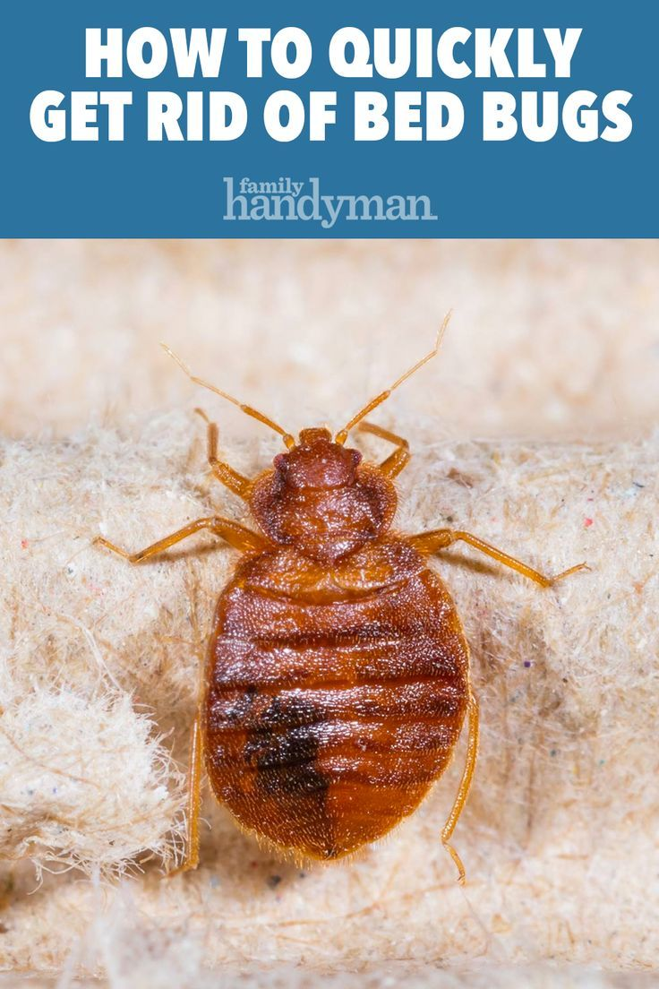 How to get rid of bed bugs a diy guide in 2020 rid of
