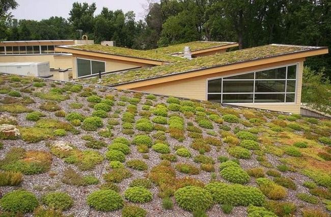 Nature Inspires Sustainable Solutions For The Home Green Green Roof Roof Garden Roof Architecture