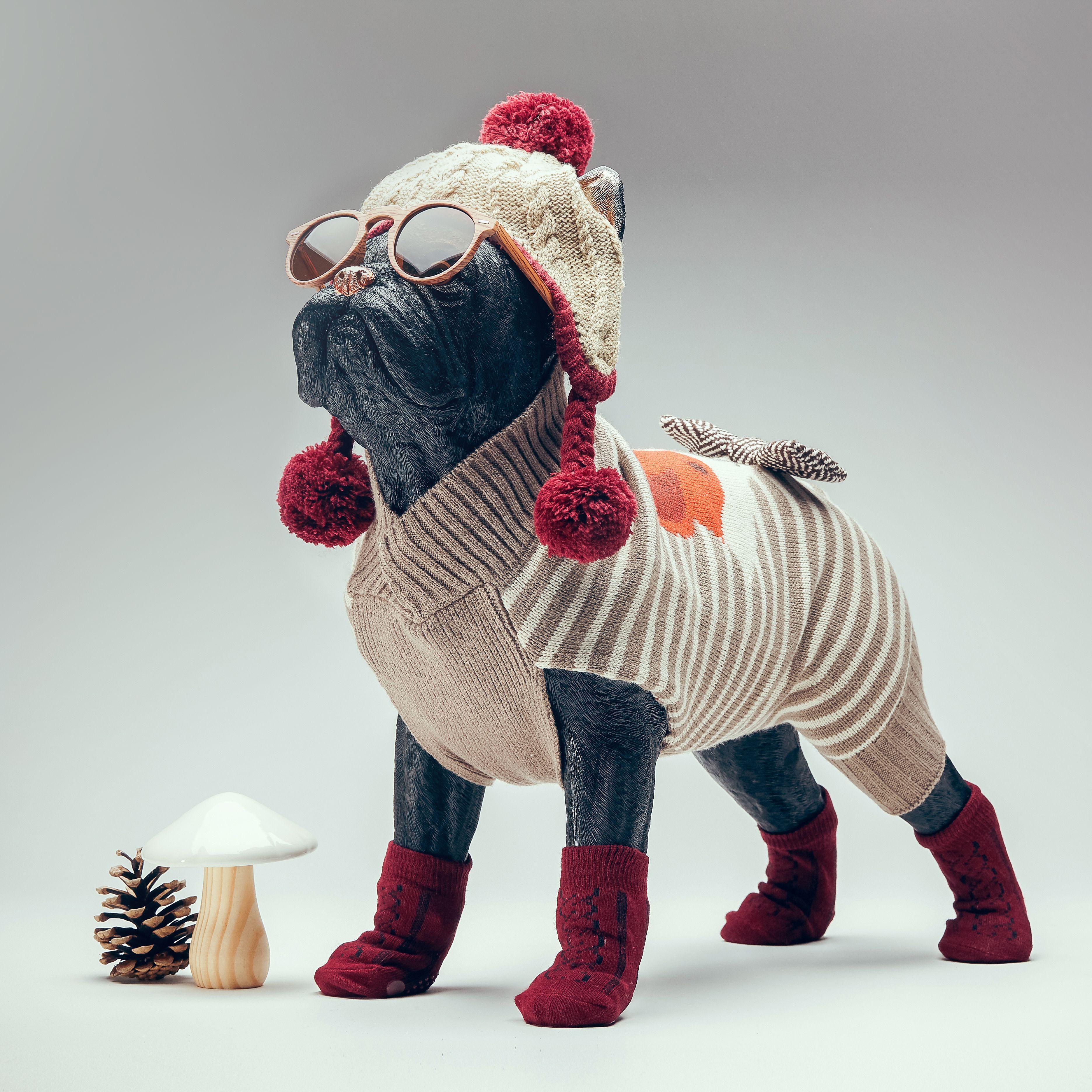 Epingle Par Gifi Sur Collection Animalerie Pull Pour Chien Collier Pas Cher Harnais