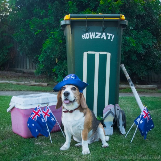 26 365 Australia Day Hat Australia Day Cute Puppies