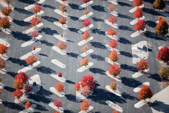 Parking Lot Planters, East St. Louis, IL 2010