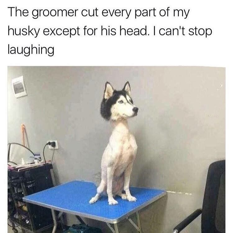 He Probably Feels Soooooo Much Better In The Heat But Might Be A Chilly In The Air Conditioning Funny Animal Jokes Funny Dog Pictures Funny Animals
