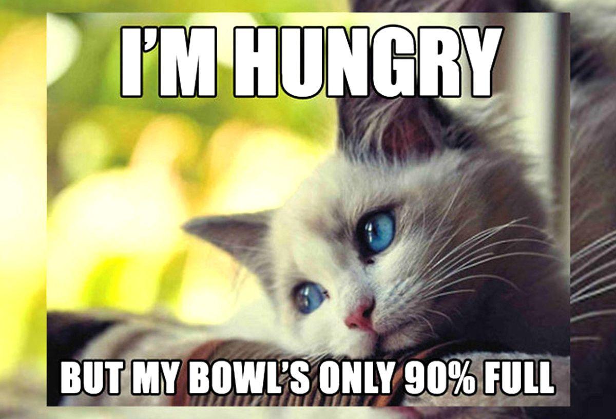 Top Laughing So Hard Cat Memes Cat Memes Funny In 2020 Cat Quotes Funny Cute Cat Memes Funny Cat Memes