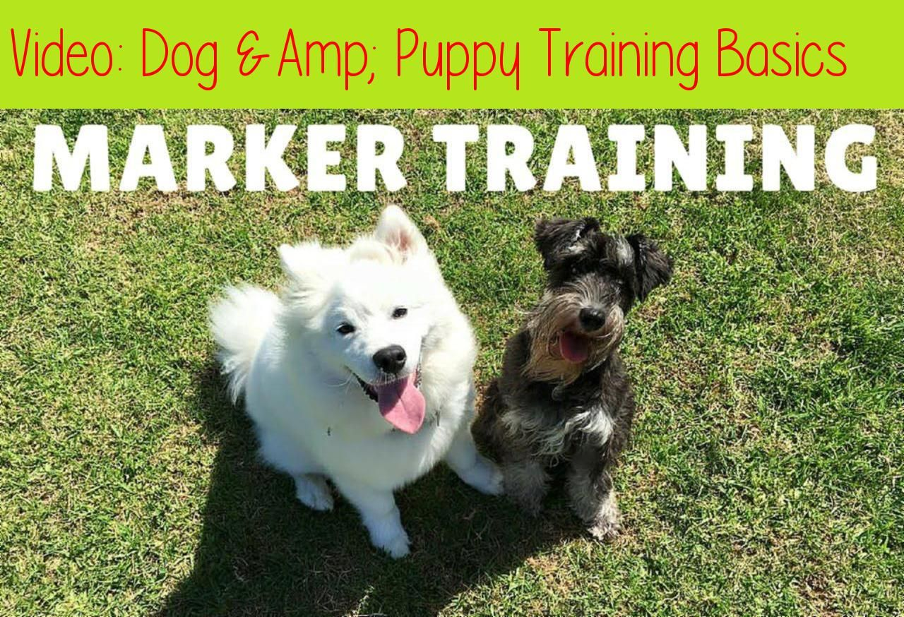 Dog Amp Puppy Training Basics Marker Training 039 Iq K9