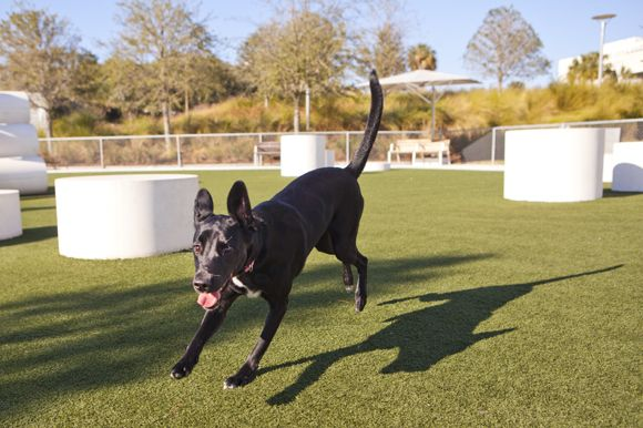 Attention Dog Lovers! Here are fun activities in Tampa for you and your furry friend!