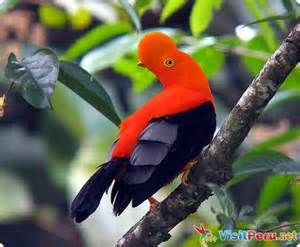 Peru National Animal - Bing Images