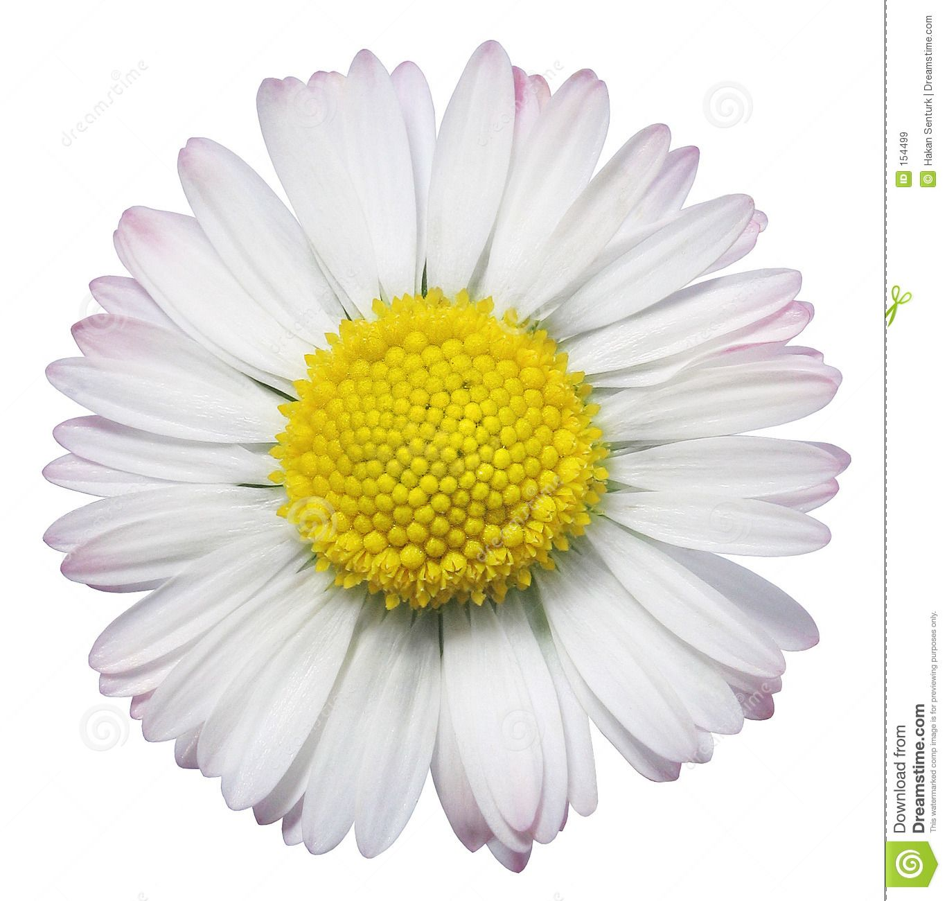 Flowers For Yellow Daisy Flower Drawing Daisys Pinterest