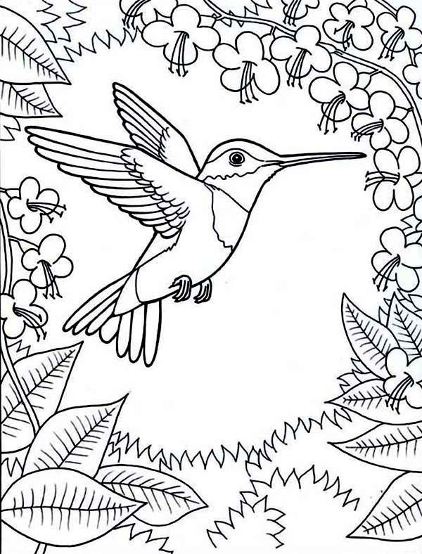 Hummingbirds Framed By Flowers Hummingbird Coloring