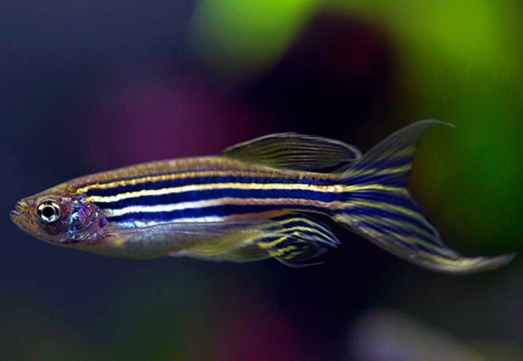 Pin On Swimmingfish Pins