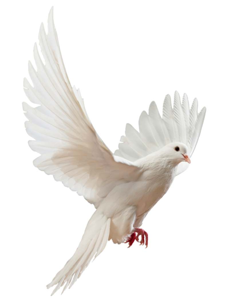 15 Doves Flying Png For Free Download On Ya Webdesign Dove Pictures Dove Images White Doves