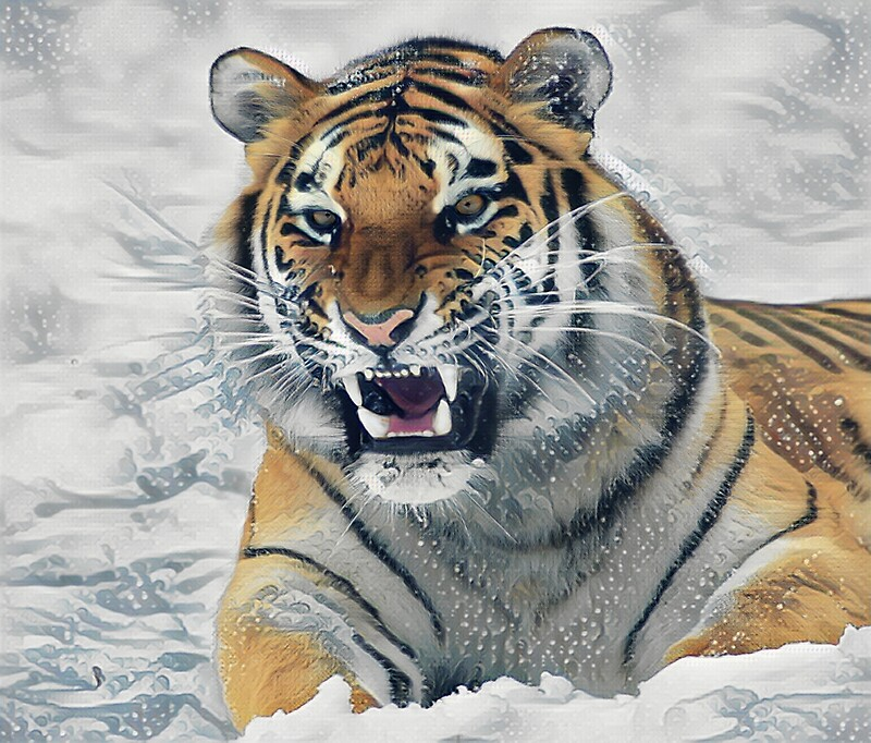 'Tiger In The Snow' Photographic Print by Heathermarie321
