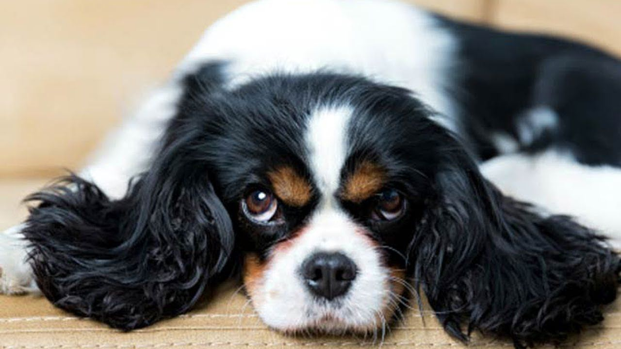10 Best Dog Breeds For Small Apartments