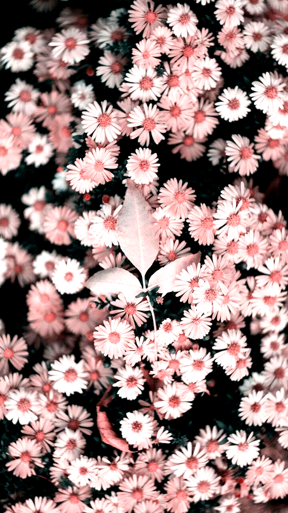 Rosegold Wallpaper Pinterest Carriefiter 90s Fashion Street Wear Street Style Photography Sty In 2020 Flowers Photography Flower Aesthetic Beautiful Wallpapers