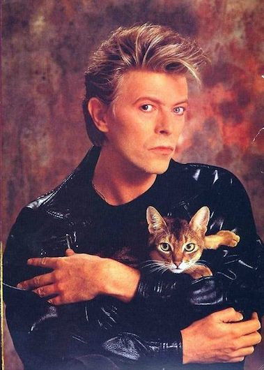 The Thin White Duke poses for a mock high school yearbook photo with his cat.