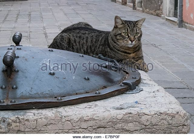Well: Venice, Italy with cat