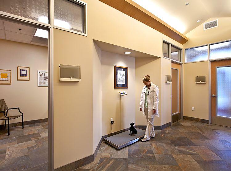 17++ Mountain vista animal hospital images