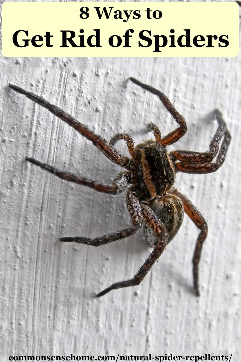 Natural Spider Repellents 8 Ways to Get Rid of Spiders