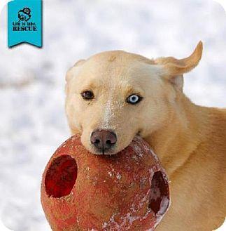 03/18/16-Temple, GA - Labrador Retriever Mix. Meet Mason, a dog for adoption. http://www.adoptapet.com/pet/12064294-temple-georgia-labrador-retriever-mix