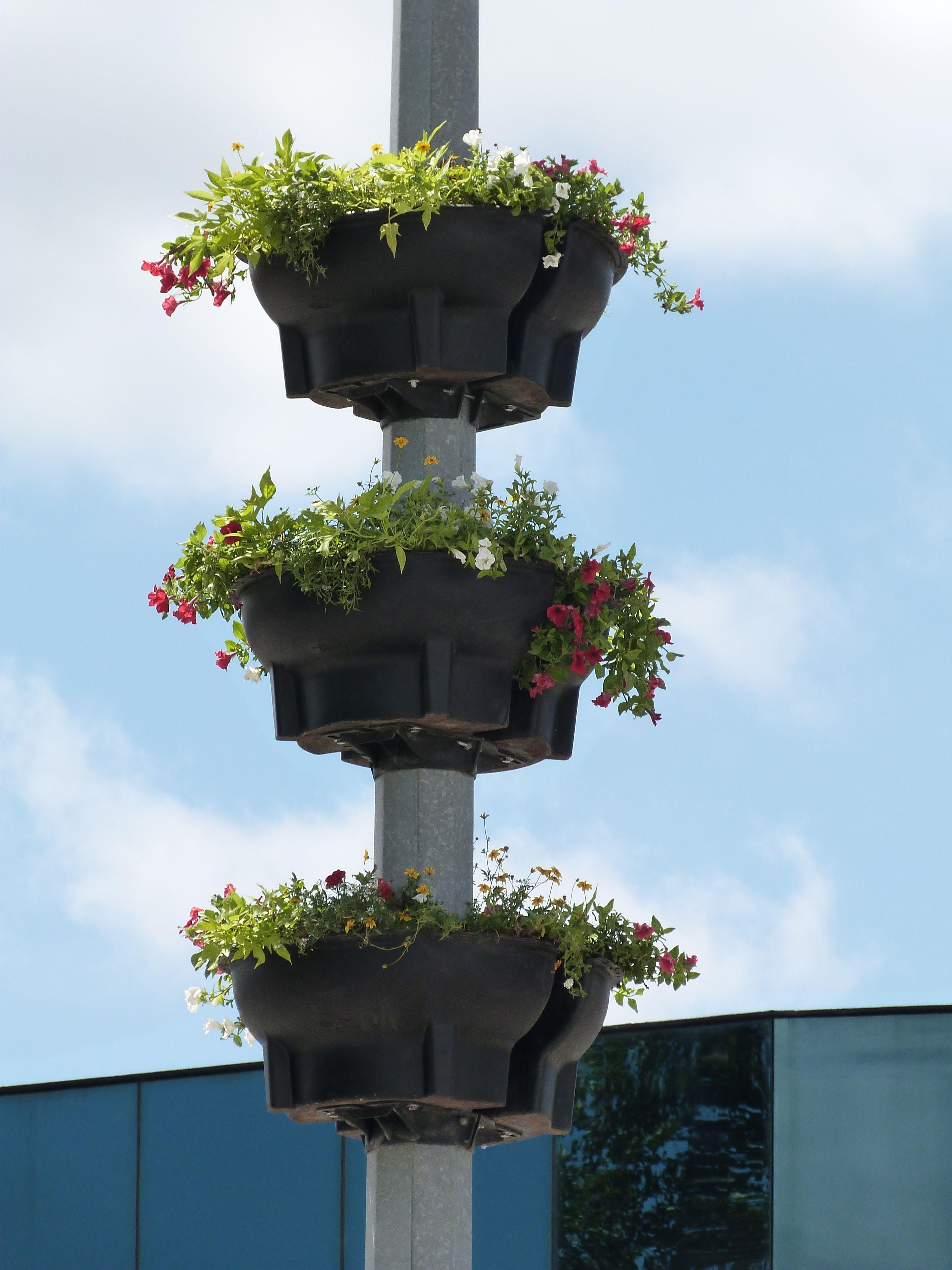 cestas florales