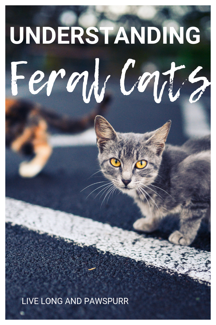 How To Identify Feral Cats Feral Cats Cat Adoption Feral Kittens