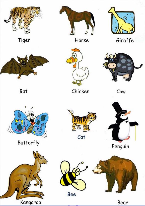 Todos Los Anminales Y Su Pronunciacion Animales En Ingles Animales Actividades De Ingles
