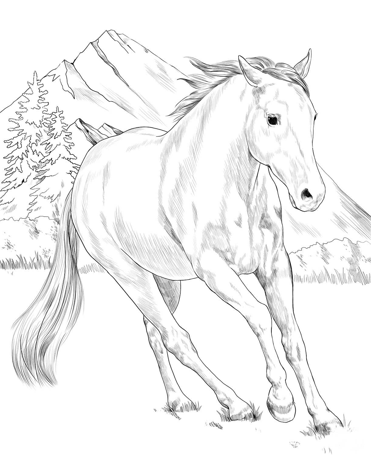 American Paint Horse Coloring Page Horse Coloring Books Horse Coloring Animal Coloring Pages
