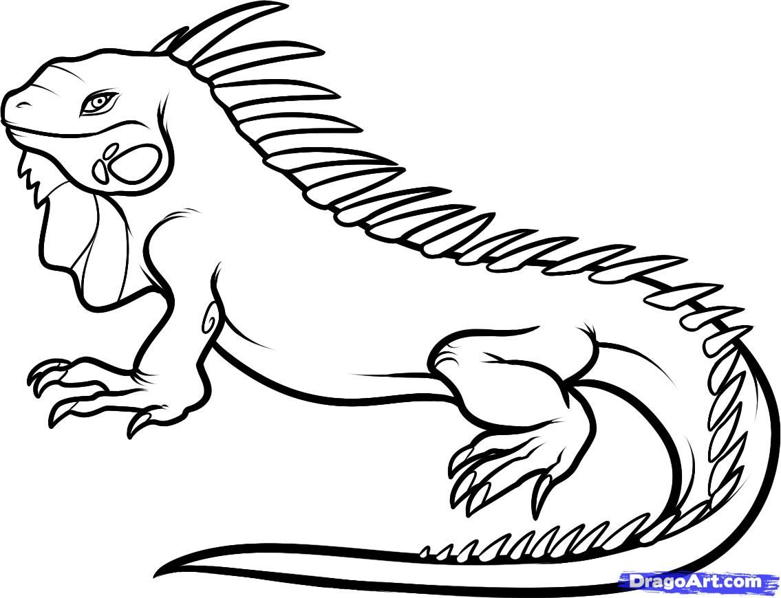 How to Draw an Iguana, Step by Step, Reptiles, Animals, FREE ...