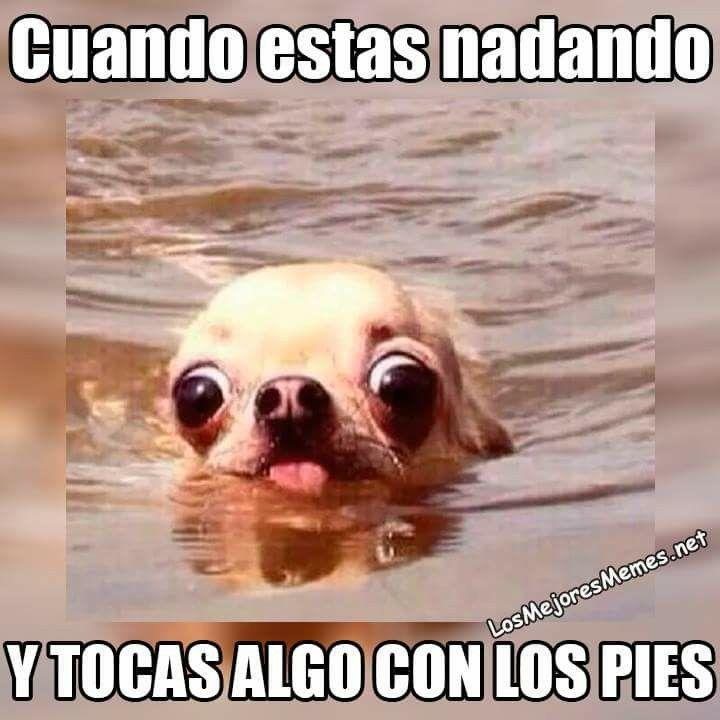 Pin De Belen Zappulla En Funny Cachorros Chihuahua Humor Divertido Sobre Animales Memes Perros