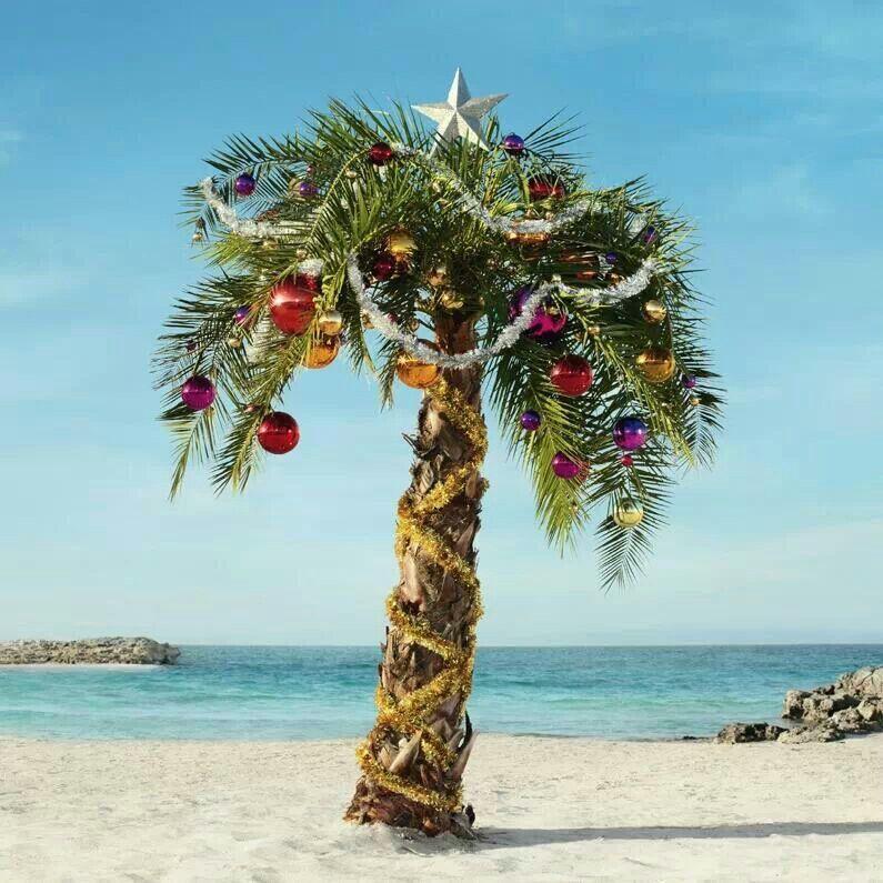 Merry Christmas … | Christmas palm tree, Florida christmas ...