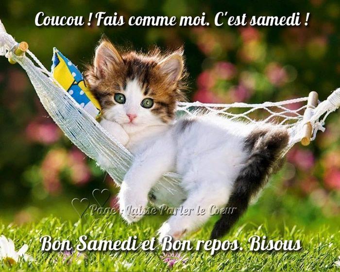 Coucou ! Fais comme moi. C'est samedi ! | Chats adorables, Cute kittens,  Animales