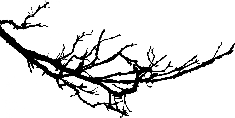 winter tree vector wallpapers mobile with hd desktop 3000x1504 px rh pinterest com tree branch vector free download tree branch vector image