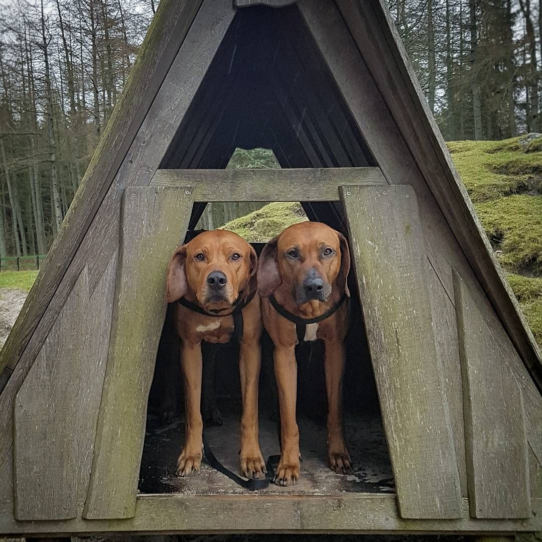 boys jumped into this shelter to keep out of the rain ...