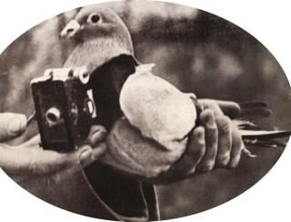 A spy pigeon during World War I is strapped with a camera to do an aerial survey in 1915 in France.