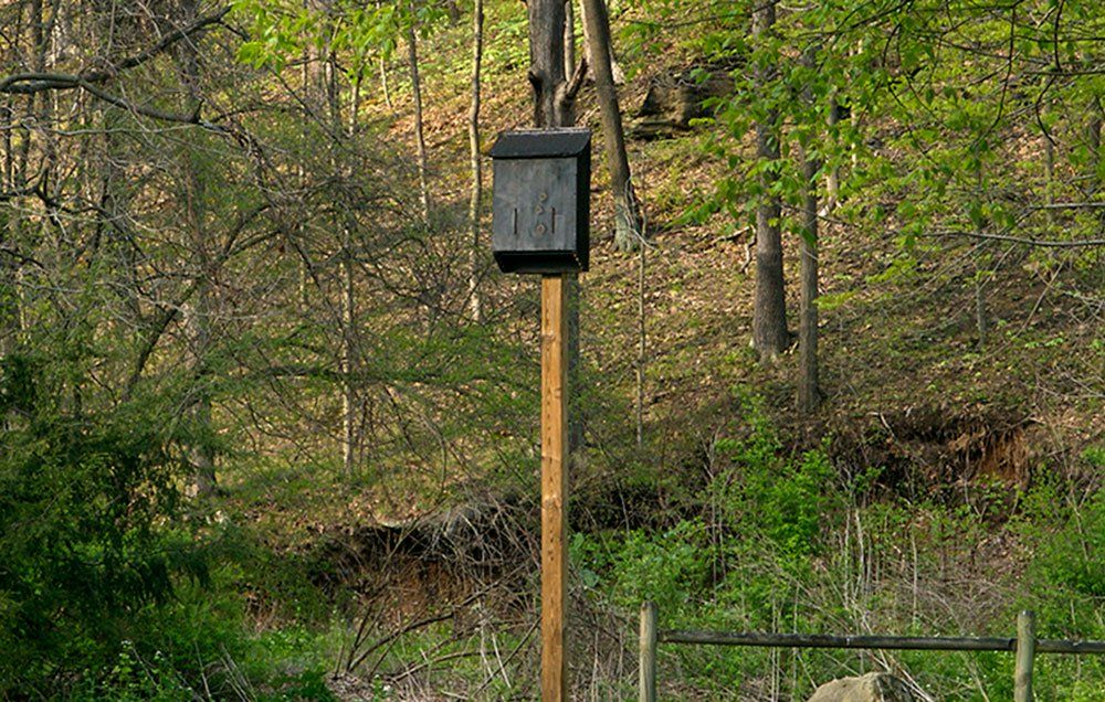 Build this diy bat house to attract friendly insect