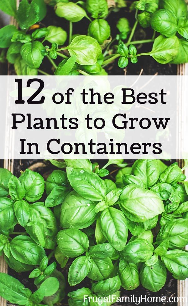 12 Plants That Grow Well In Containers Growing 400 x 300