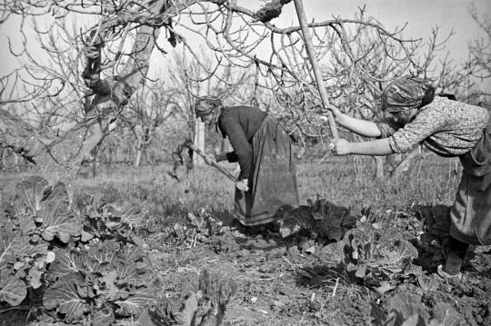 Artaman: The Hyperborean Garden Italian peasant women at work in their garden just behind the forward area of the Italian Front, 16 December 1943.  Photo: George Frederick Kaye; Alexander Turnbull Library, Wellington, New Zealand. 41 notas
