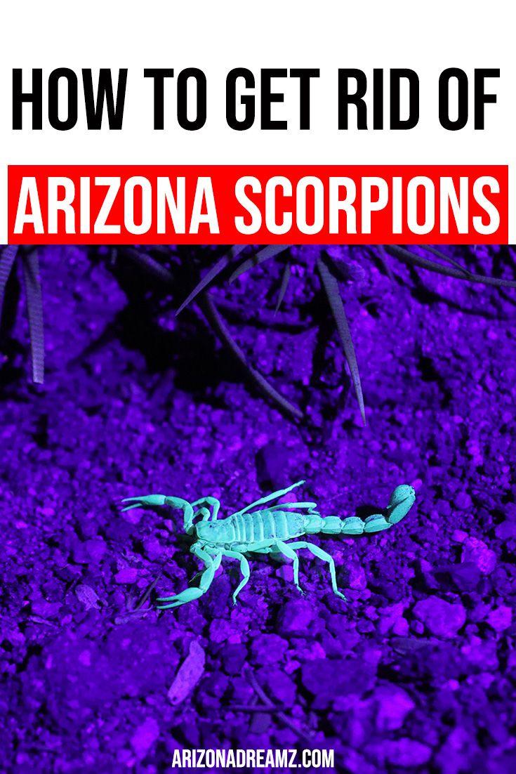 Arizona scorpions how to get rid of scorpions arizona