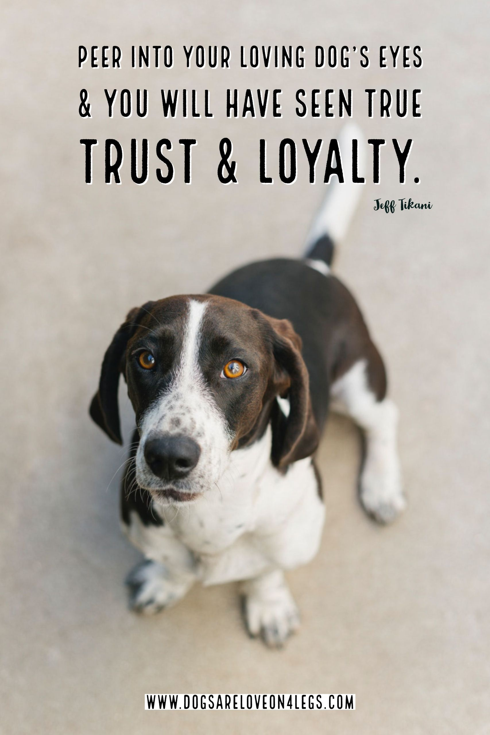 Dog Quote Peer Into Your Loving Dog S Eyes Dog Dog Quotes Inspirational Quotes Funny Quotes Life Quotes Dog Eyes Dog Quotes Cute Dog Quotes