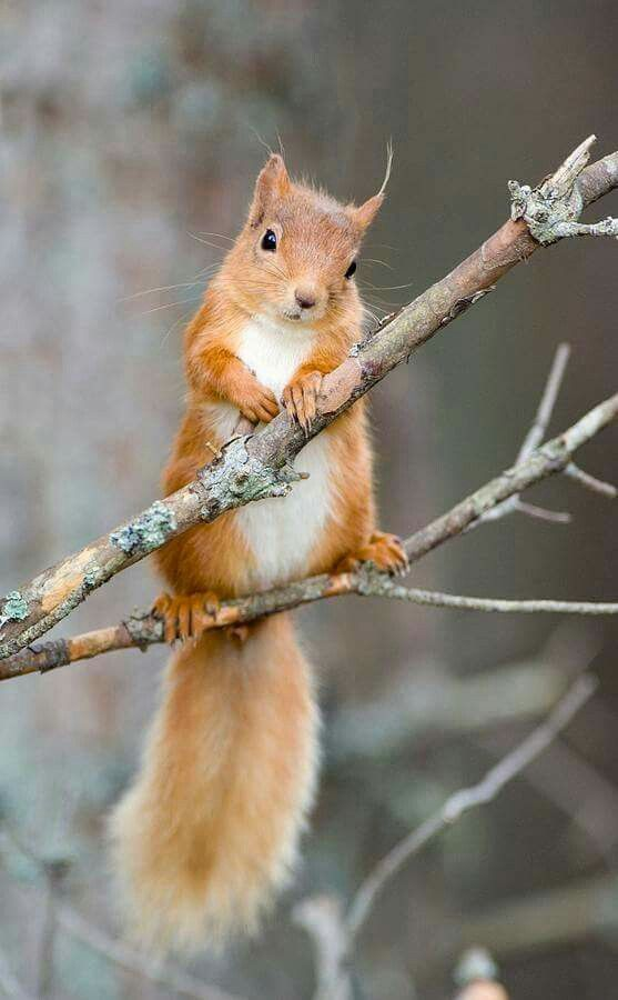 Pin by Suzanne Bolock on I love squirrels Animals