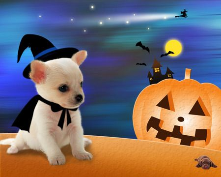 Puppy S Halloween Desktop Nexus Wallpapers Halloween Animals Halloween Puppy Dog Halloween