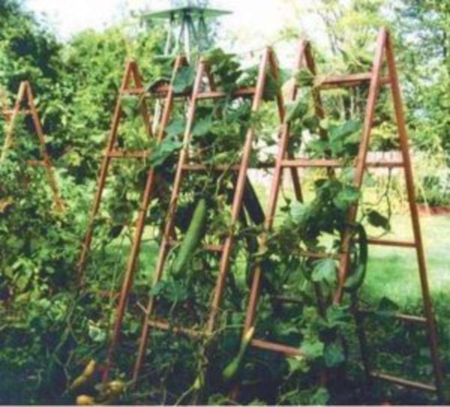 5 Vertical Vegetable Garden Ideas For Beginners: 33 Vertical Vegetable Garden Ideas To Inspire You
