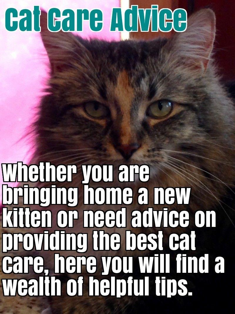 Comprehensive Cat Care Advice Cat Care Advice Cats