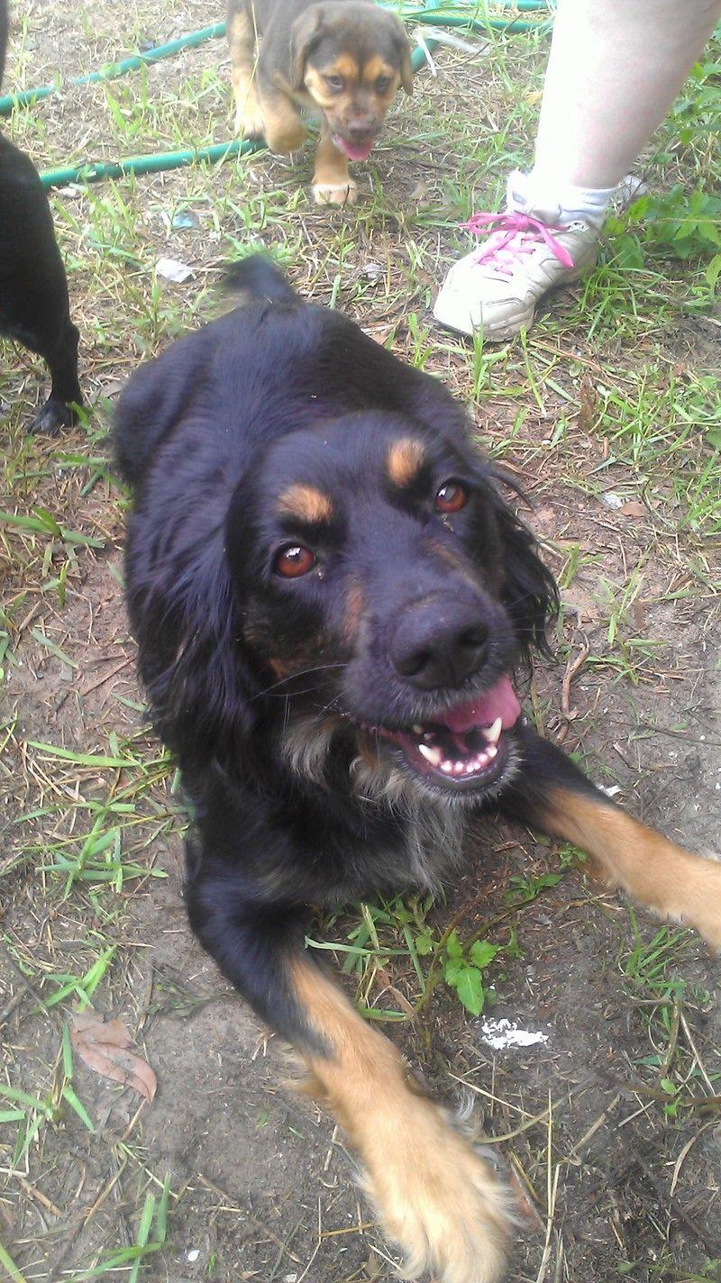 Adopt bella on petfinder dog training near me obedience