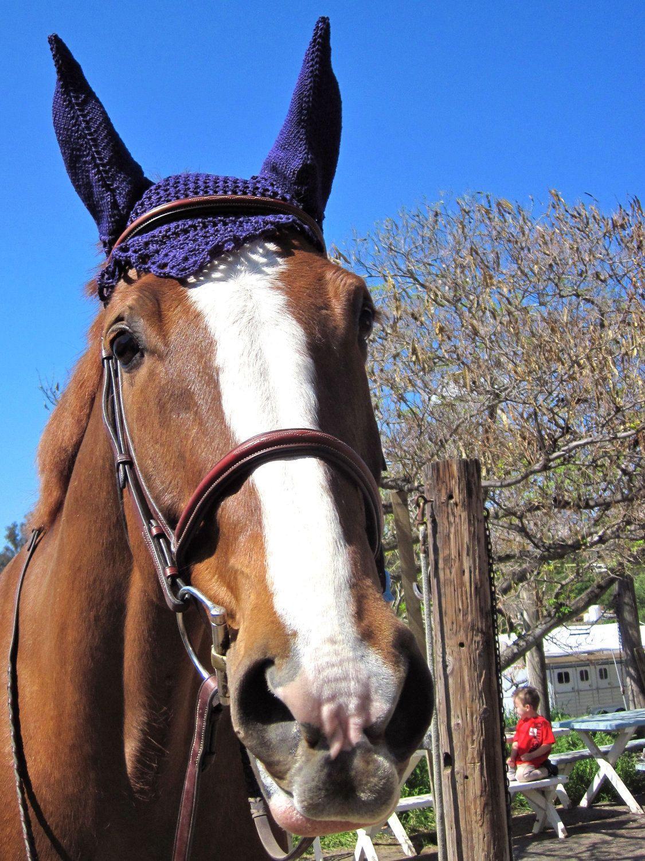 Horse ear bonnet PATTERN.PDF/ Horse hat / horse ear net / Minihorse ...